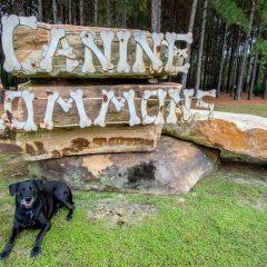 Hammock Bay Dog Park